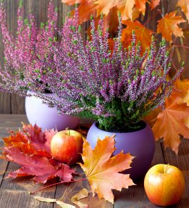 Fall Heather Jigsaw Puzzle