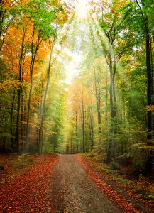 Fall Road Jigsaw Puzzle