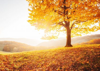 Fall Sunshine Jigsaw Puzzle