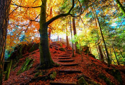 Fall Trail Jigsaw Puzzle
