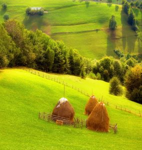 Farm Haystacks Jigsaw Puzzle