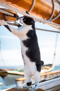 Feline Sailor Jigsaw Puzzle