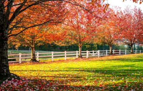 Fenced in Meadow Jigsaw Puzzle