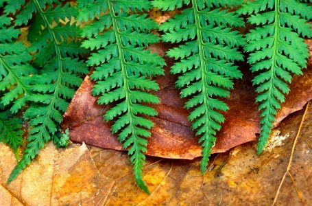 Fern Fronds Jigsaw Puzzle