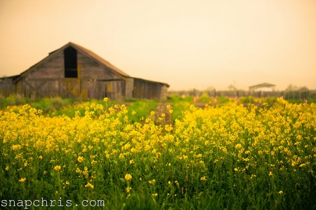 Field and Barn Jigsaw Puzzle