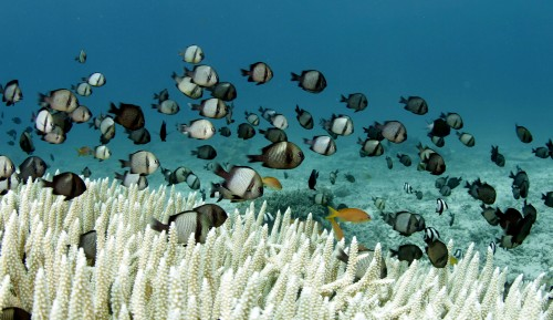 Fish and Coral Jigsaw Puzzle