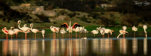 Flamingoes Jigsaw Puzzle