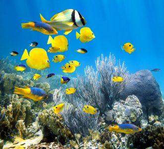Florida Keys Coral Jigsaw Puzzle