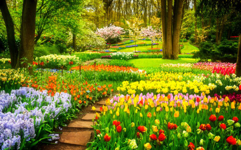 Flower Beds Jigsaw Puzzle