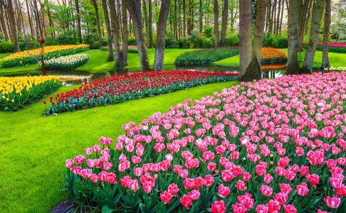 Flower Park Jigsaw Puzzle