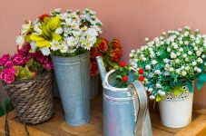 Flower Pots and Cans