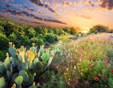 Flowering Cactus Jigsaw Puzzle