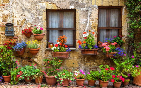 Flowers in Pots Jigsaw Puzzle