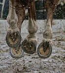 Flying Horse Hooves