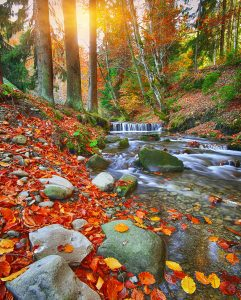 Forest Creek Jigsaw Puzzle