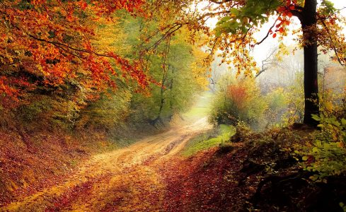 Forest Dirt Road Jigsaw Puzzle