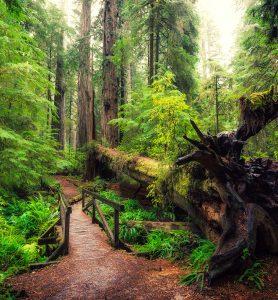 Forest Footbridge Jigsaw Puzzle