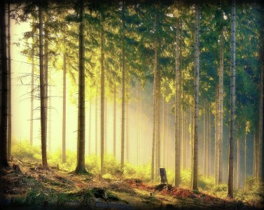 Forest Light Jigsaw Puzzle