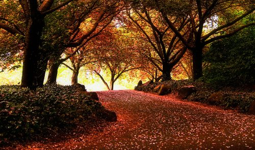 Forest Road Jigsaw Puzzle