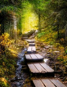 Forest Steps Jigsaw Puzzle