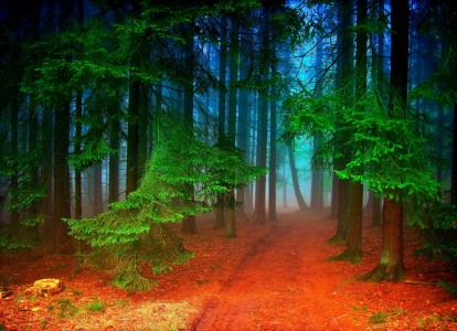 Forest Trail Jigsaw Puzzle