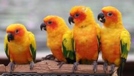 Four Colorful Birds