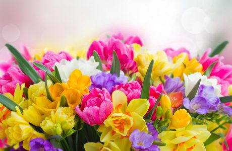 Freesias and Daffodils Jigsaw Puzzle