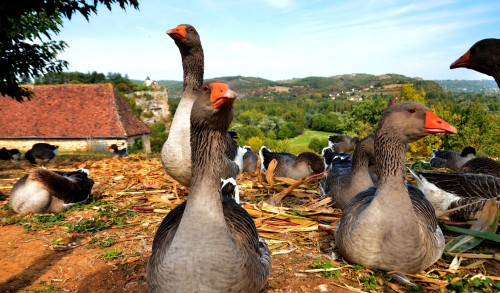 French Geese Jigsaw Puzzle