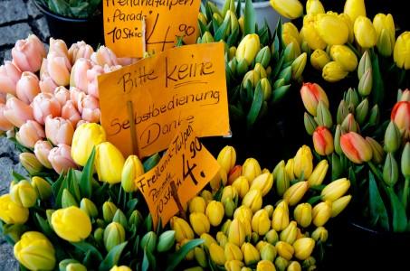 Fresh Tulips Jigsaw Puzzle