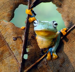 Frog in Leaf Jigsaw Puzzle