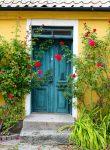 Front Door Roses