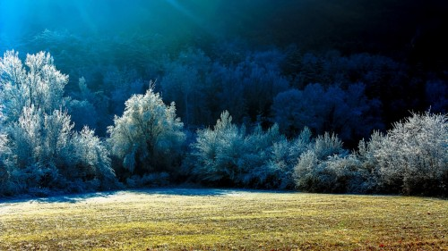 Frosty Morning Jigsaw Puzzle