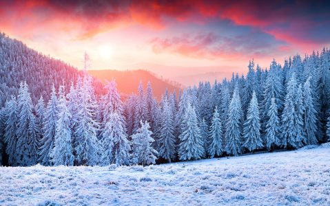 Frosty Pines Jigsaw Puzzle