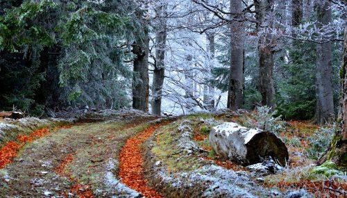 Frosty Trail Jigsaw Puzzle