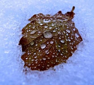 Frozen Leaf Jigsaw Puzzle