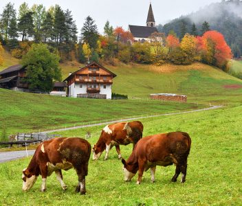 Funes Valley Cows Jigsaw Puzzle