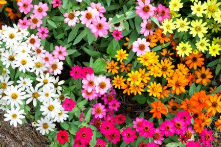 Garden Colors Jigsaw Puzzle
