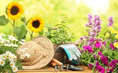 Garden Hat and Tools