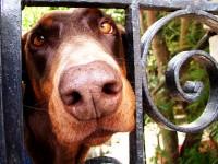 Gate Dog