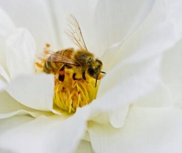 Gathering Pollen Jigsaw Puzzle