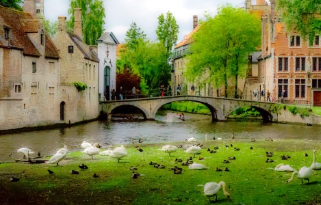 Geese and Ducks Jigsaw Puzzle