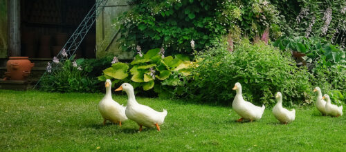 Geese on the Move Jigsaw Puzzle