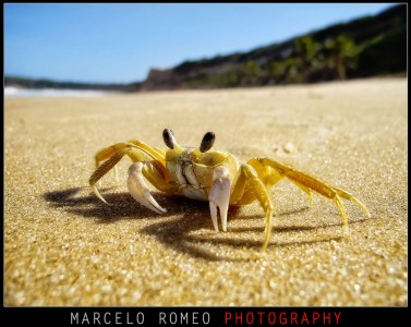 Ghost Crab Jigsaw Puzzle