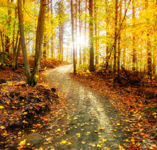 Golden Trail Jigsaw Puzzle