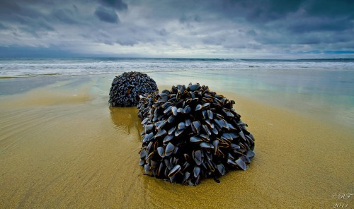Goose Neck Barnacles Jigsaw Puzzle