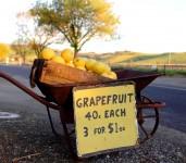 Grapefruit Sale