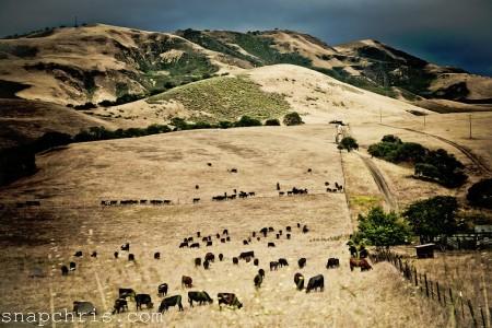 Grazing Herd Jigsaw Puzzle