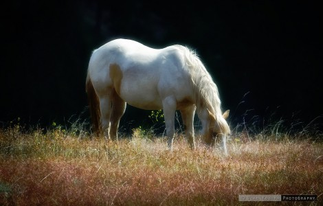 Grazing Horse Jigsaw Puzzle