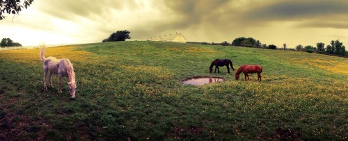 Grazing Horses Jigsaw Puzzle