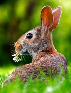 Grazing Rabbit Jigsaw Puzzle